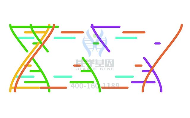 复合磷酸氢钾药物基因检测