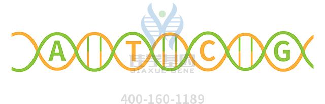 复合酶片药物基因检测