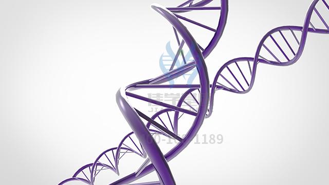 富马酸亚铁药物基因检测