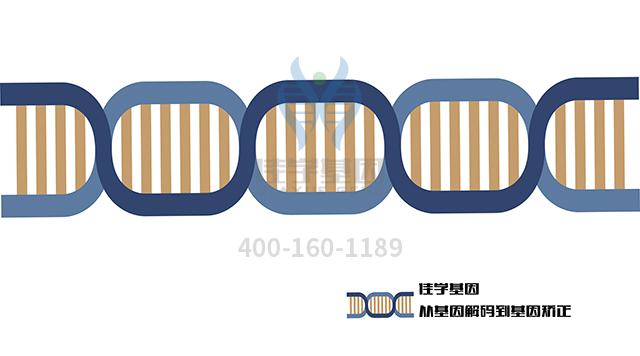 复合维生素乙药物基因检测