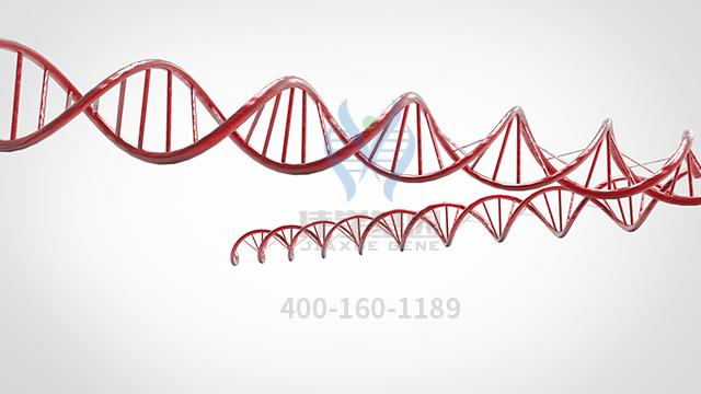 复维B4药物基因检测