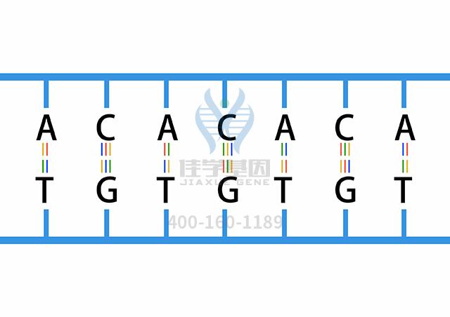 副肾碱药物基因检测