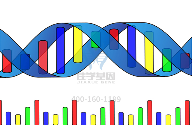 副肾素药物基因检测