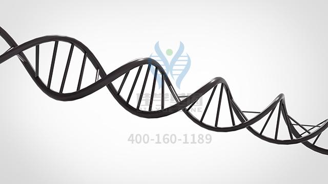 富马酸酮替芬药物基因检测
